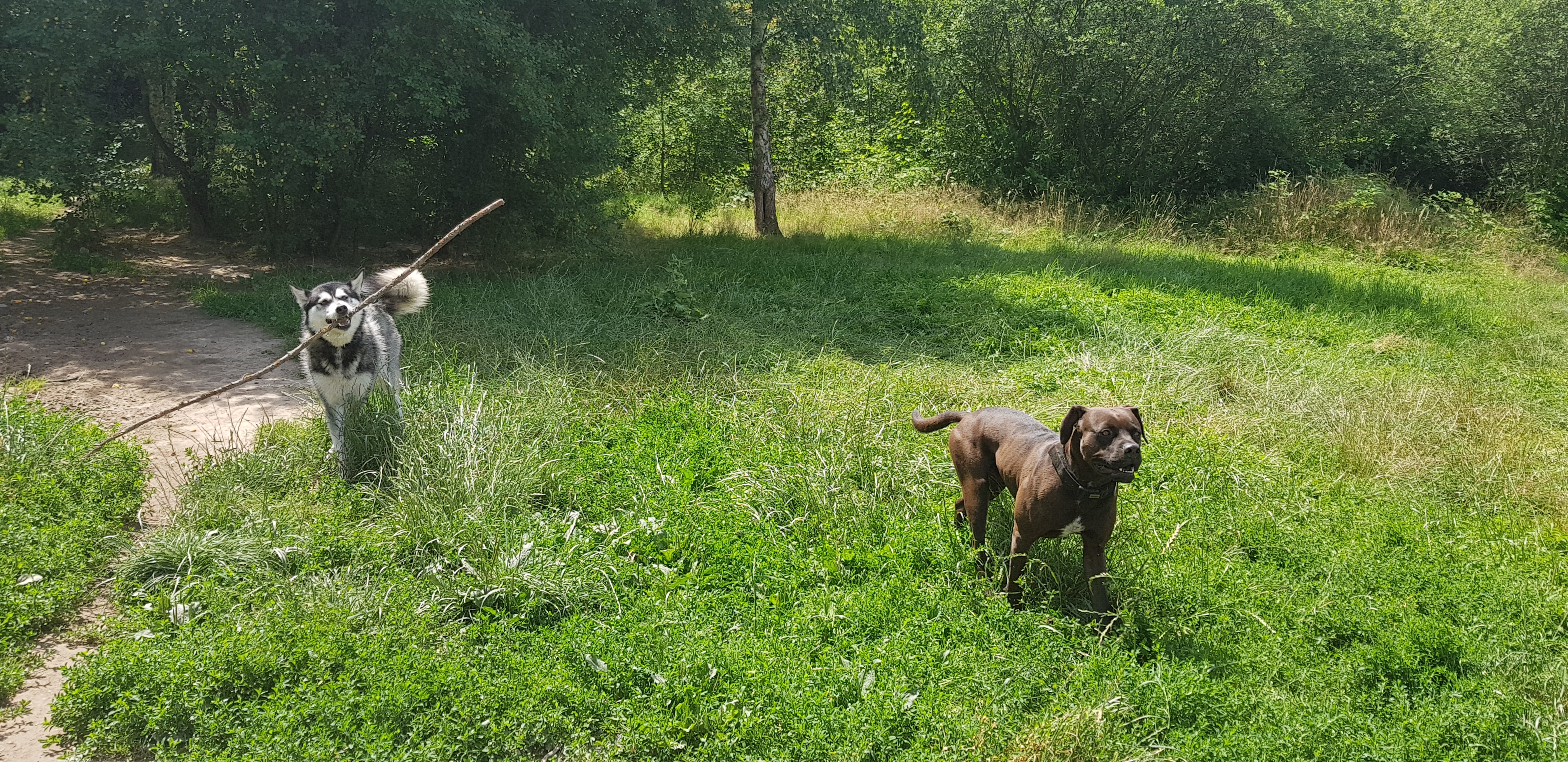 Leben in der Tierherberge Offenburg