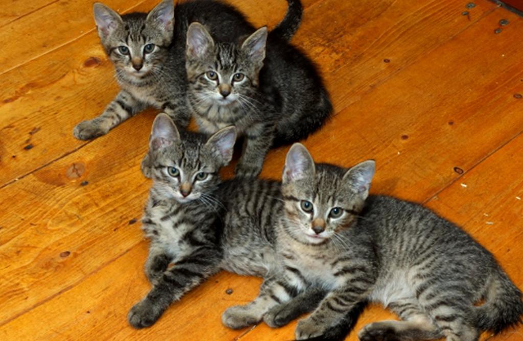 Überall Katzen und täglich werden es mehr