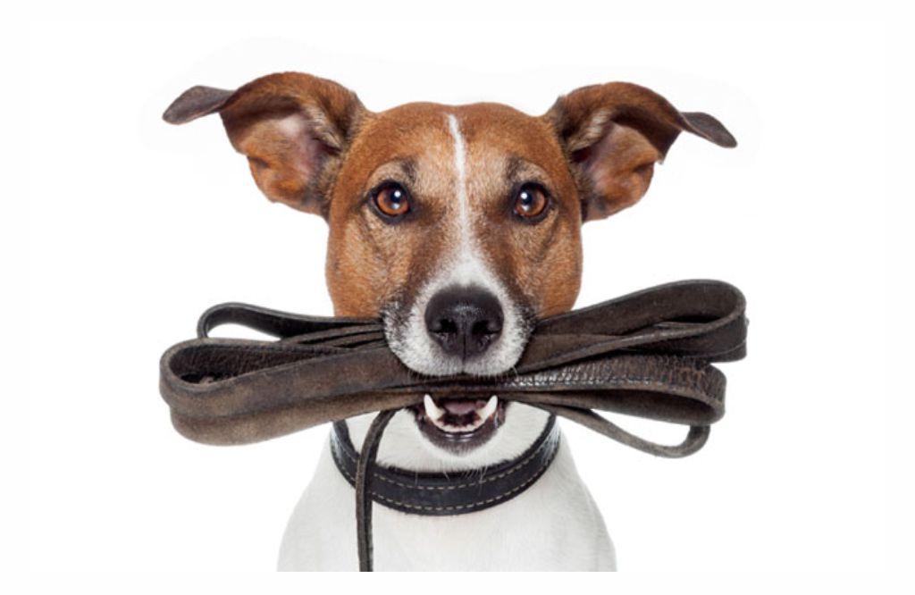 Leinenpflicht ein wichtiges Thema für alle Hundehalter