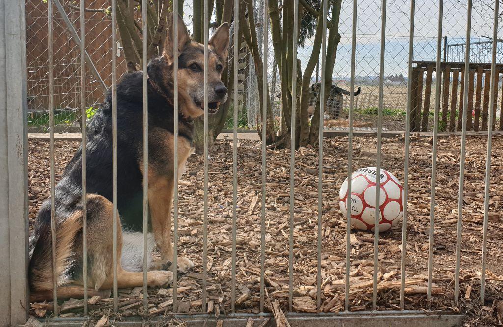 Hoffnung für alle tierischen Bewohner im Tierheim Pürten