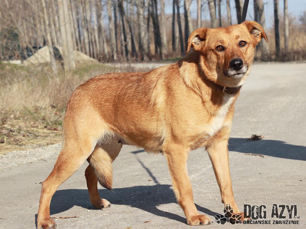 Melly – Eine Seele von Hund