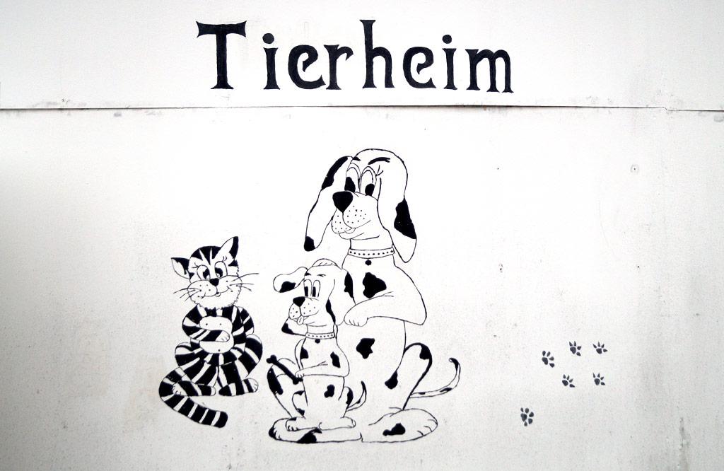 Tierheim Luckenwalde bietet Obhut zu Weihnachten