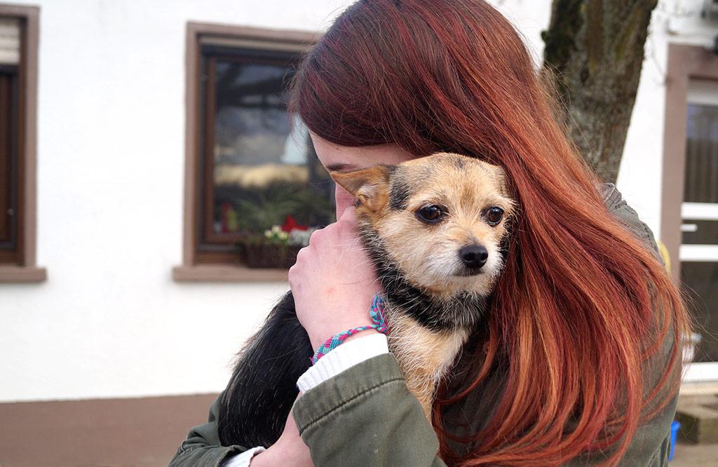 Tolle Familienhunde warten im Tierheim Gernsheim auf ihr Glück