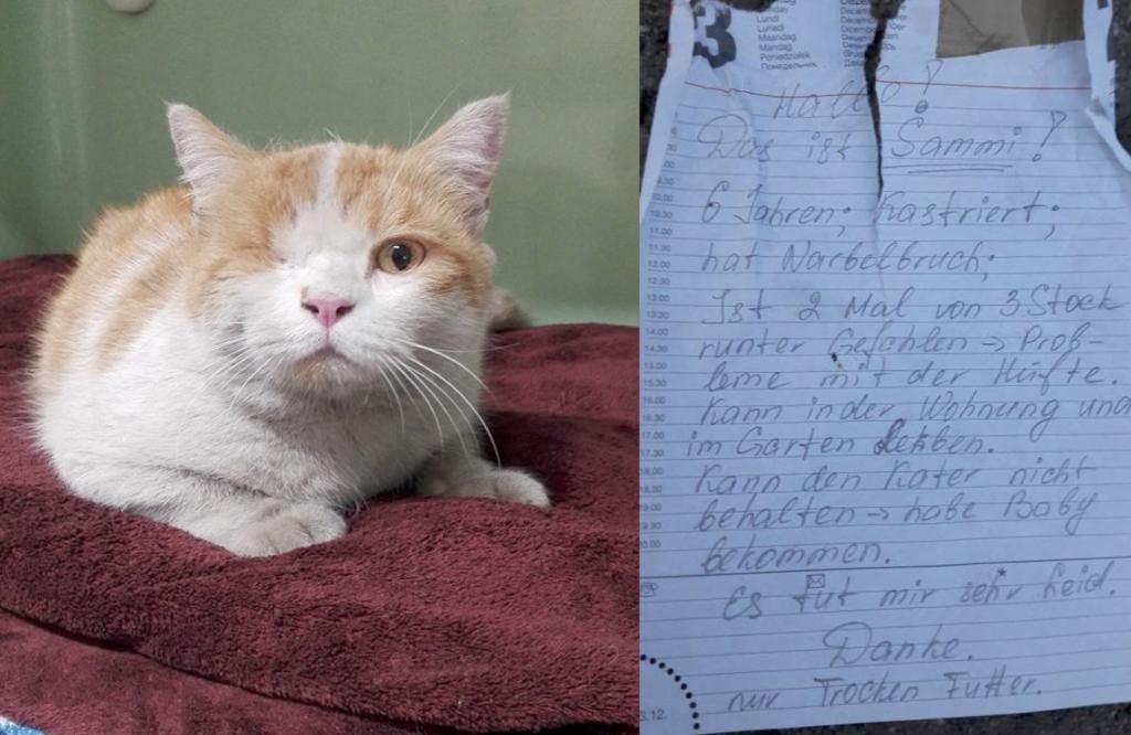 Kater Sammy wurde herzlos vor dem Tierheim Neustadt ausgesetzt!