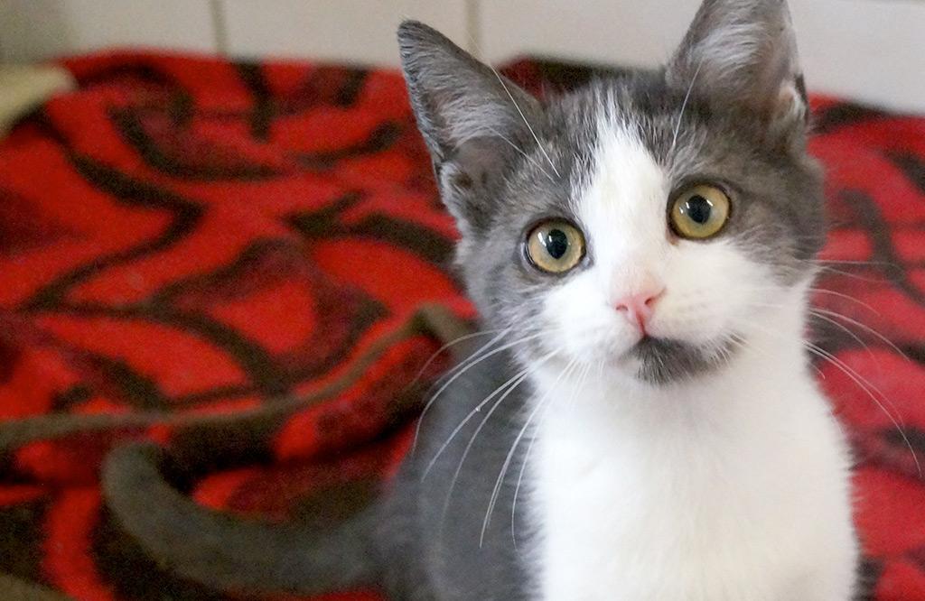 Tierschutz Halle e.V. – ein Verein für Tiere in Not