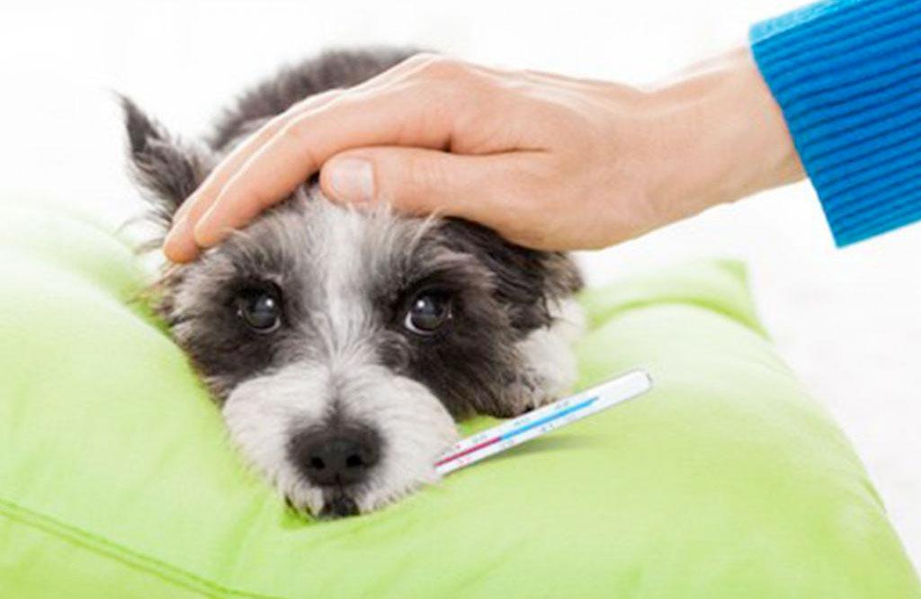 Achtung! Grippewelle bei Hunden in Baden-Württemberg
