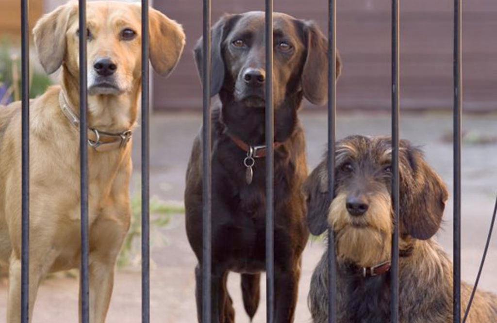 Deutsche Tierheime haben Helfer + Personalmangel!