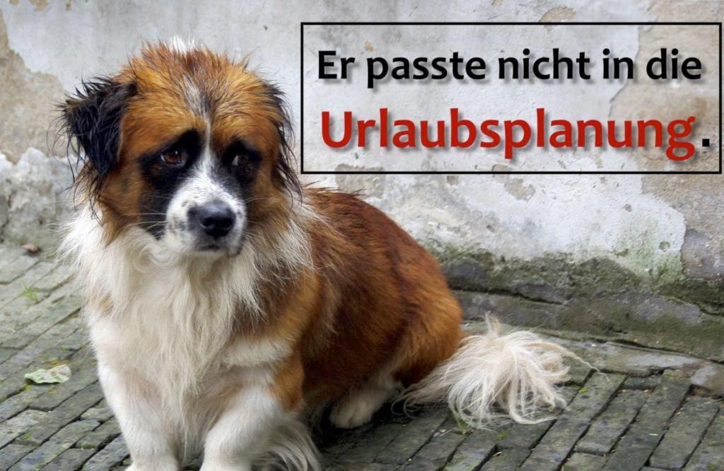 Emotionaler Appel des Tierschutzvereins: Tierheim ist kein Zuckerschlecken!