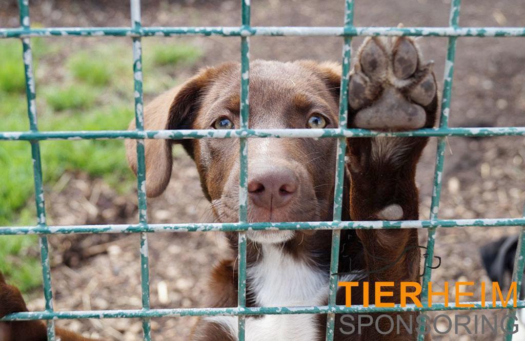 Hundewelpen und viele Katzenkinder warten im Tierheim Wiesengrund auf Adoption!
